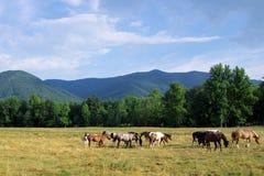 Horses In Mountain Valley Stock Photo