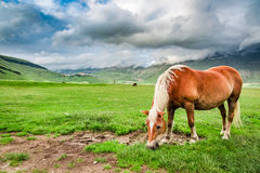 Horses in mountain valley, Umbria Royalty Free Stock Photography