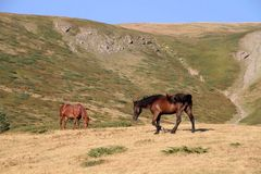 Horses. Mountain village life nature animal enyoj Bjelasica Montenegro colors royalty free stock images