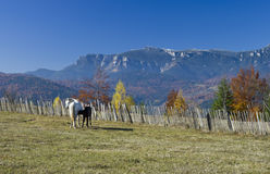 Horses on mountain Stock Photography