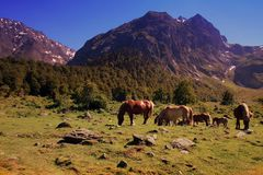 Horses in mountains Royalty Free Stock Images