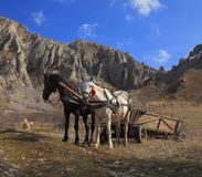Horses and mountains. Image of  an old wagon with two horses at the foot of the Trascau mountains Stock Images