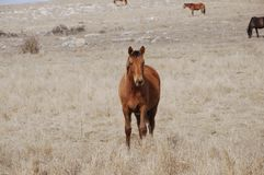 Horses in mountains. House horses are grazed in the field Royalty Free Stock Image