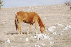 Horses in mountains. The brown horse has inclined a head Royalty Free Stock Photo