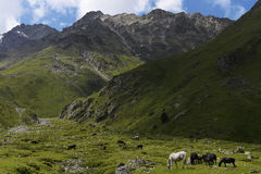 Horses and mountains Stock Photos