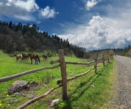 Horses in the mountains and the fence Stock Image