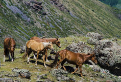 Horses in the mountains Stock Photos