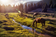 Horses in the mountains Stock Images
