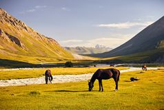 Horses in the mountains of Kyrgyzstan stock images