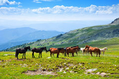 Horses on mountains meadow Stock Photography