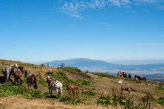 Horses in the mountains. Mountain peaks and a herd of horses in the mountains Stock Photography