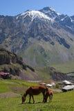 Horses in Mountains. Stepantsminda. Georgia. Stock Photo
