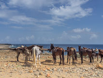 Horses at The Natural pool Royalty Free Stock Images
