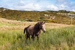 Horses near Connemara National Park, Co. Galway, Ireland. Are much enjoying this spectacularly beautiful part of the world stock photography