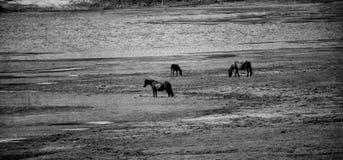 Horses near lake Royalty Free Stock Photos