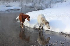 Horses near the melting river in  spring Royalty Free Stock Image