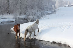 Horses near the melting river in spring Royalty Free Stock Photos