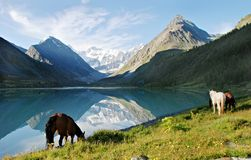 Horses near mountain lake Ak-kem Royalty Free Stock Photo