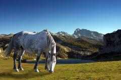 Horses near mountains Stock Photos