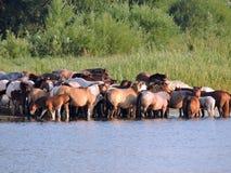 Horses near river Stock Photo