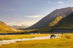 Horses in the mountains of Kyrgyzstan stock photos