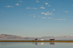 Horses near water Royalty Free Stock Photo