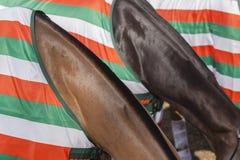 Horses Necks Colors stock photo