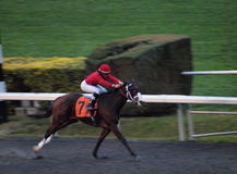 Horses number 7 races past the finishline Royalty Free Stock Images