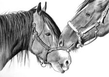 Horses Nuzzling, Pencil Realism Drawing Royalty Free Stock Image