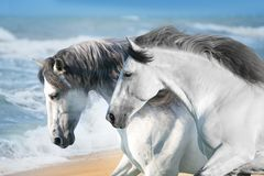 Horses in ocean stock photos