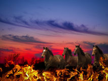 Horses Of The Apocalypse Stock Photos