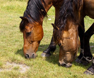 Horses in old castle Royalty Free Stock Images