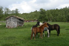 Horses and old houses Royalty Free Stock Photos