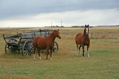 Horses  and old wagon Stock Photography