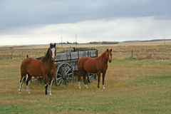 Horses  and old wagon Royalty Free Stock Photography