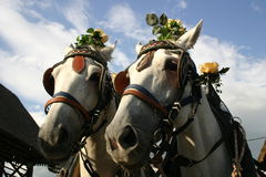 Horses oldstyle with roses Royalty Free Stock Images