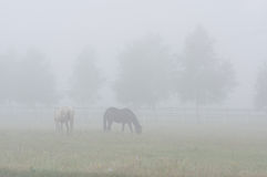 Horses On The Pasture. Stock Photo