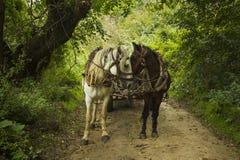 Horses ona  countryside road Royalty Free Stock Photos
