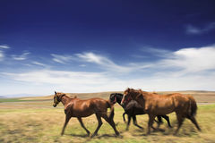 Horses in open Stock Image