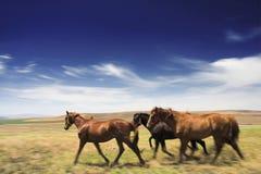 Horses in open Stock Image