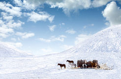 Horses out on snow covered field Royalty Free Stock Photo