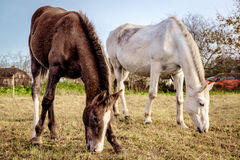 Horses outdoors Royalty Free Stock Photography