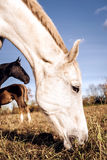 Horses outdoors stock images