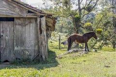 Horses outdoors eating stock photo