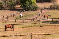 Horses Outdoors Paddocks Stock Images