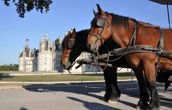 Horses outside Chambord Castle Royalty Free Stock Images