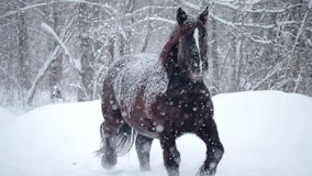 Horses Outside during a Winter Snowstorm