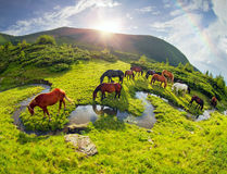 Horses over the rainbow stream stock photos