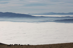 Horses over a sea of fog. Some horses pasturing on top of a mountain over a sea of fog filling a valley, with some distant and misty mountains on the background stock photos