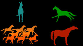 Horses pack. 7 different animations. Alpha channel. Alpha matte. 4K.